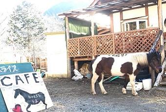 Rivendale Horse Club【リベンデール ホース クラブ】(小菅村)